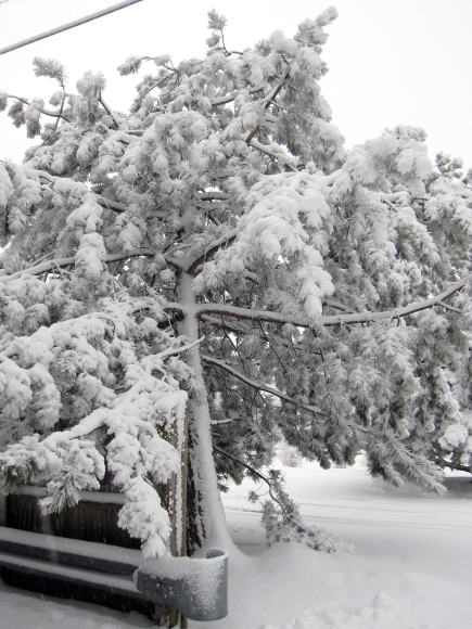 heavy_snow