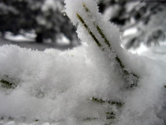 snow_close_up