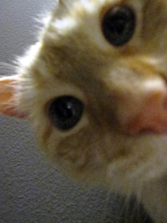 cat_face